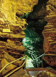洞穴サンゴ